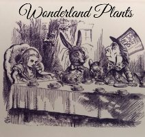 Wonderland plants
